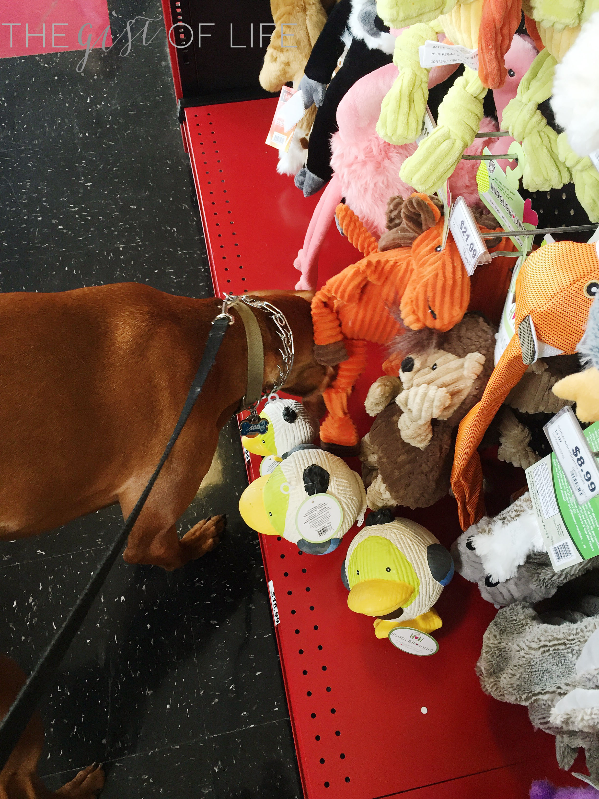 Ace picking out toy